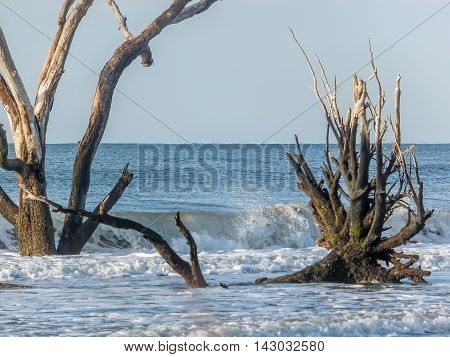 This is a shot from Driftwood Beach, which is on Edisto Island, South Carolina.