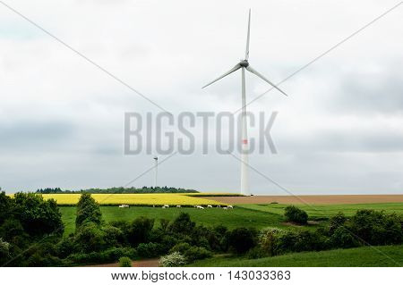 Belgium Rustic Landscape with Power Generating Wind Turbines on Green Grass and Yellow Flowers Field with Small Sheep in Cloudy Day Outdoors