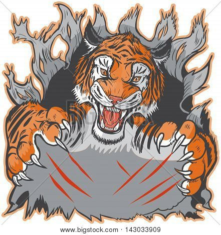 Cartoon clip art illustration template of a tiger mascot ripping or clawing out of the background. Vector layers are set up for easy placement of custom design elements under the paws and claw marks.