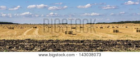Agricultural field on which lie Straw Haystacks after the harvest. Stock photo