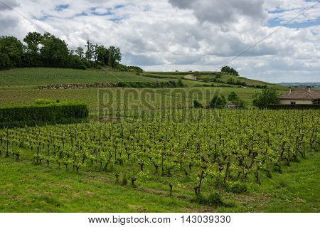 Vineyards of Saint-Emilion one of the main red wine production areas of Bordeaux region France