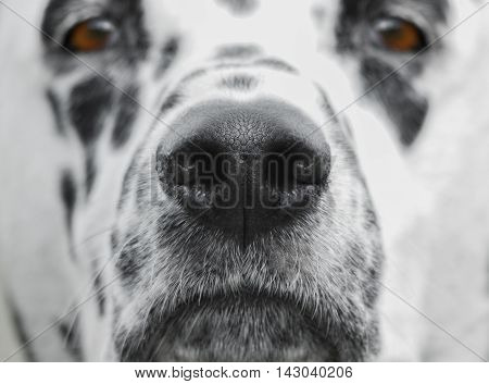 Beautiful and curious dog's nose -- only nose in focus