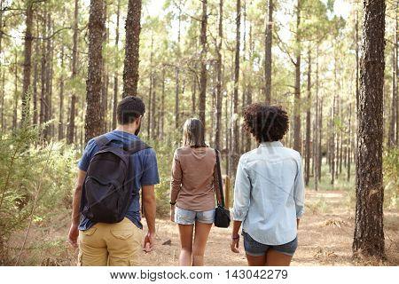 Friends Walking In A Pine Plantation