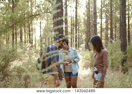 Lost Friends In A Pine Forest