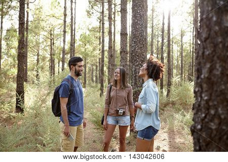 Making Jokes In The Pine Forest