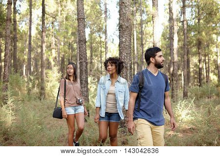 Friends Visiting The Pine Tree Forest