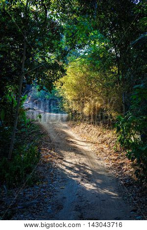 The path in the tropical jungle in Thailand