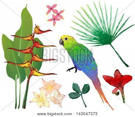 Vector Set Of Colorful Tropical Elements For Your Design