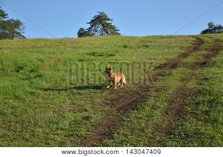 Small Brown Dog Abounded