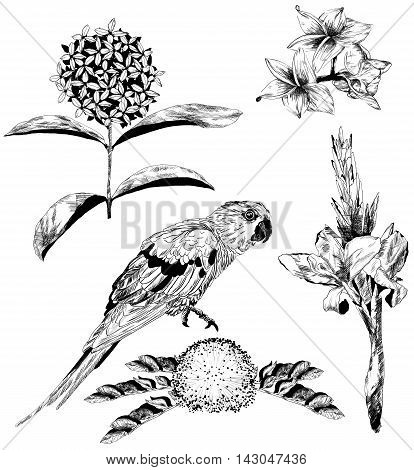 Vector Set Of Tropical Flowers And Parrot