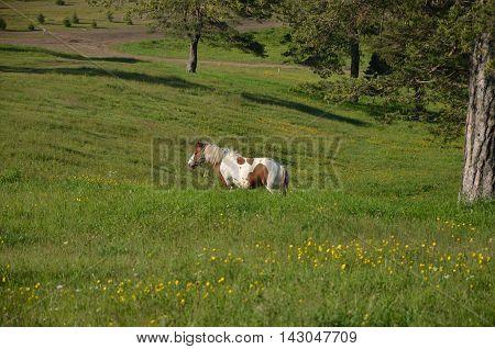Horse On Green Field