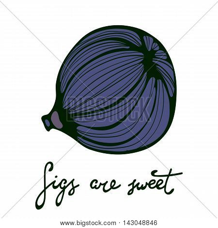 Hand drawn figs. Eco food. Illustration in vector format