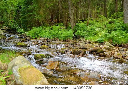 river with stones and ferns in the forest in summer day
