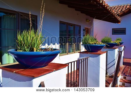 Contemporary style potted plants on Spanish tiles taken in a courtyard at a hacienda villa