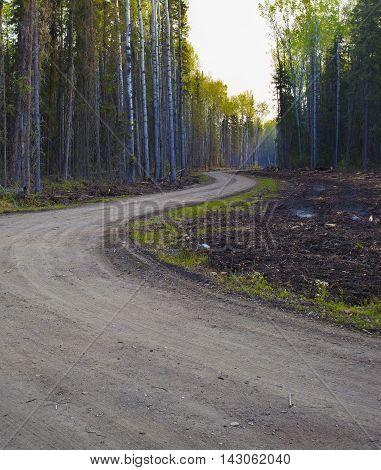 Dusty dirt road at dawn in a Saskatchewan Canada forest
