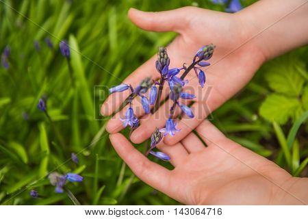 Young woman holding hands above grass bluebell flowers between palms