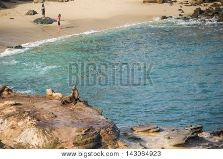 San Diego, USA - December 7,2015: One seal sunbathing on cliff at La Jolla cove with people standing on the beach