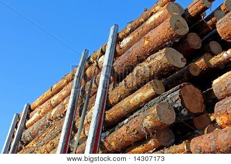 Pine Timber On Logging Trailer