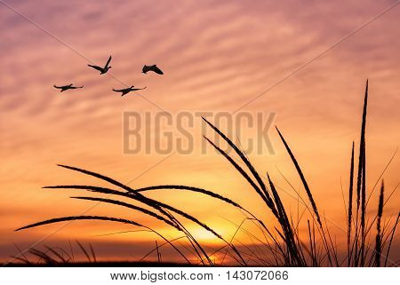 Birds flying against evening sunset environment or ecology concept