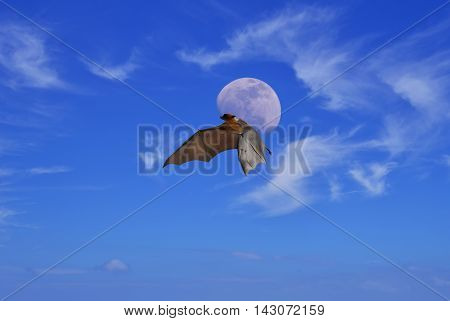 Halloween with flying fox over cloudy sky