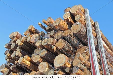 Pine Logs On Trailer