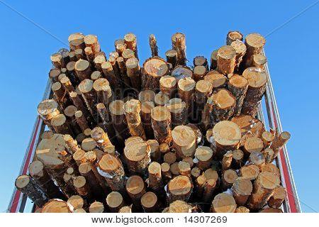 Pine Logs On Logging Semi Trailer
