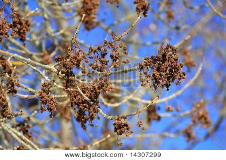 Winter Tree Blossoms Against Blue Sky