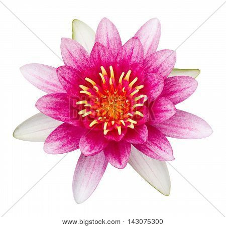 Pink Lotus Flower Isolated On White With Clipping Path