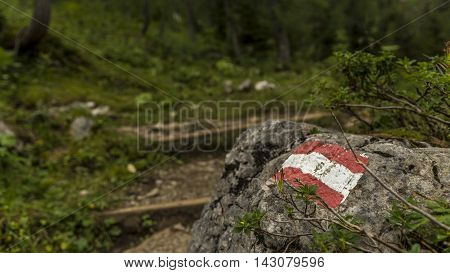 Hiking trail in the forest with path marking on rock