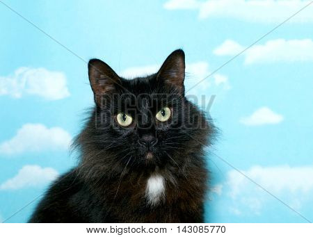 Black cat with long fur and a patch of white on her chest sitting looking at viewer with green eyes. Blue background sky with white clouds. Copy space