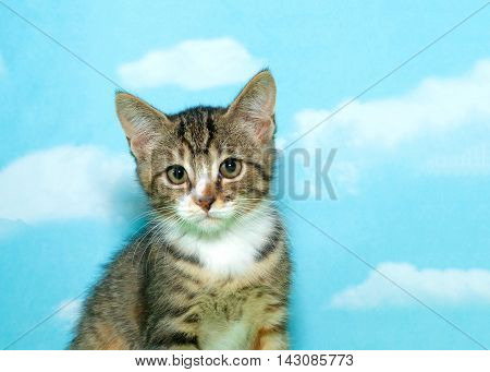 gray tan and white tabby kitten sitting looking at viewer with green and brown eyes blue background sky with white clouds. Copy space