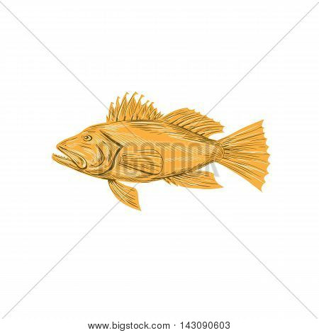 Drawing sketch style illustration of a Black sea bass or Centropristis striata an exclusively marine grouper viewed from the side set on isolated white background.