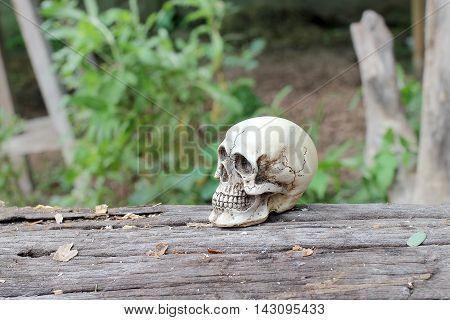 Still Life Of Human Skull In Nature
