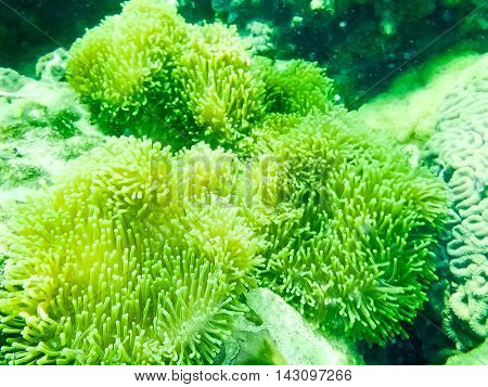 The green coral reef in tropical sea, underwater.