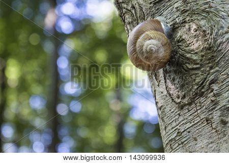 Roman Snail On A Tree Stem