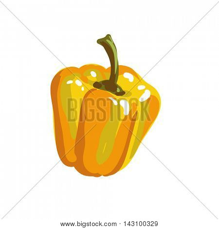 Yellow paprika bell pepper. Fresh vegetable. Vector Illustration. Isolated on white.