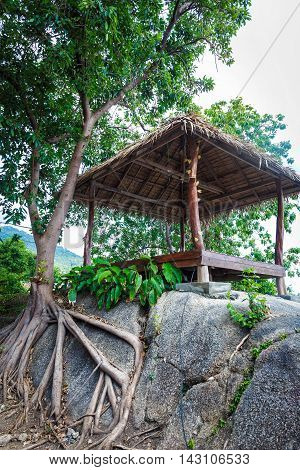 Wooden hut with a thatched roof on a rock near a tree in Thailand