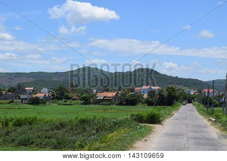Paddy Field In Rural Village In Vietnam Countryside