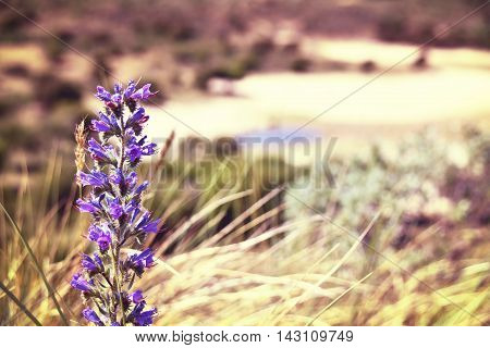 Toned image of purple flowers and defocused background with copy space.