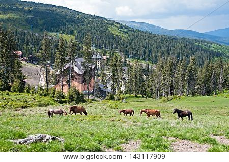 Horses feeding on grass at high-land pasture at Carpathian Mountains in rays of sun