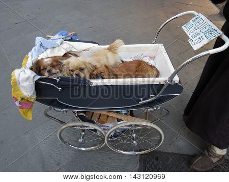 Dogs Mammal Animals