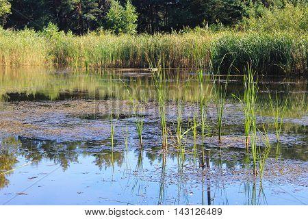 Beautiful calm lake on sunny day. Summer landscape
