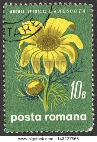 MOSCOW RUSSIA - CIRCA LUNE 2016: a post stamp printed in ROMANIA shows a Adonis vernalis flower the series