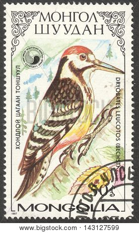 MOSCOW RUSSIA - CIRCA MAY 2016: a post stamp printed in MONGOLIA shows a Dryobates leucotos bird the series