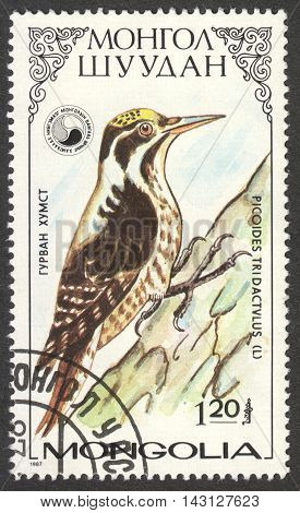 MOSCOW RUSSIA - CIRCA MAY 2016: a post stamp printed in MONGOLIA shows a Picoides tridactulus bird the series