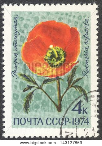MOSCOW RUSSIA - CIRCA JUNE 2016: a post stamp printed in the USSR shows a Roemeria refracta flower the series