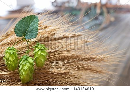 hop cones and sheaf of barley in th eold barn