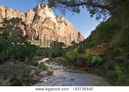 Crek in Zion National Park Utah West America