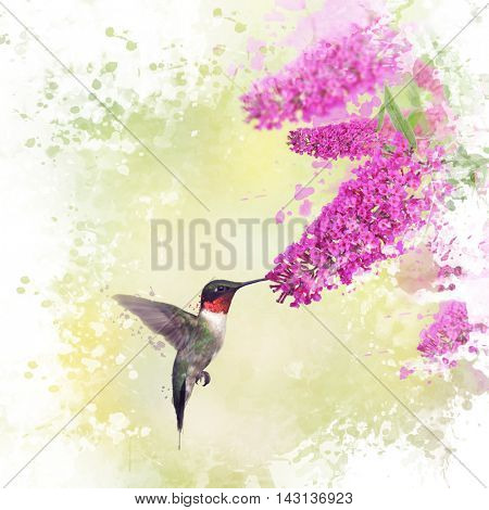 Digital painting of Ruby Throated Hummingbird and Butterfly bush