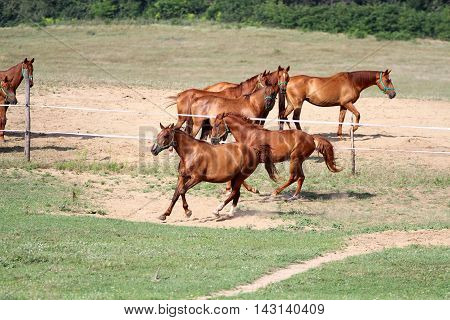 Beautiful purebred horses see more in my portfolio